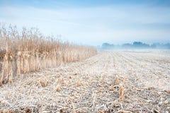 Kukurydzany jesień pole Fotografia Royalty Free