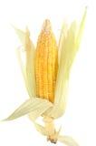 kukurydzany kolor żółty Fotografia Stock