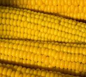 kukurydzany kolor żółty Zdjęcia Stock