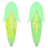 Kukurydzany kolor obraz stock