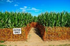 Kukurydzany labirynt Zdjęcia Stock