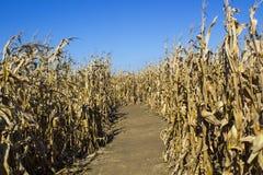 Kukurydzany labirynt Obraz Royalty Free