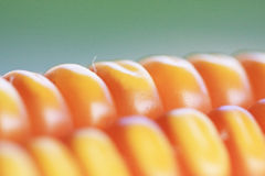 kukurydzany macro Obraz Stock