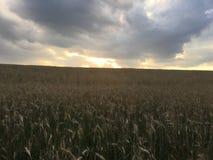 Kukurydzany niebo Fotografia Stock