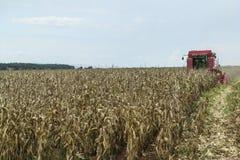 Kukurydzany żniwo Zdjęcie Stock