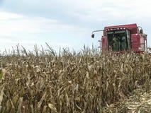 Kukurydzany żniwo Obrazy Royalty Free