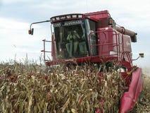 Kukurydzany żniwo Obraz Royalty Free