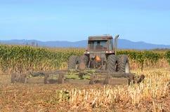Kukurydzany żniwo Fotografia Royalty Free