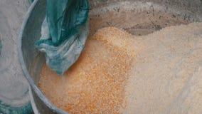 Kukurydzany otręby lub płatki w specjalnej maszynie dla mleć adrę Cornmeal lub Tarta kukurudza zamknięci w górę widoku zdjęcie wideo