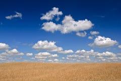 kukurydzany pole Obrazy Stock