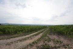 Kukurydzany pole Bayreuth Zdjęcie Royalty Free