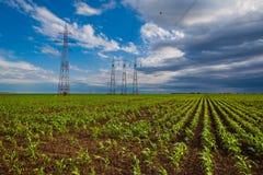 Kukurydzany pole i linie energetyczne Zdjęcia Royalty Free