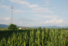 Kukurydzany pole i pilon Fotografia Royalty Free