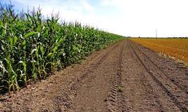 Kukurydzany pole i pole Rżnięta trawa Fotografia Stock