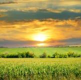 Kukurydzany pole i wschód słońca Obraz Royalty Free