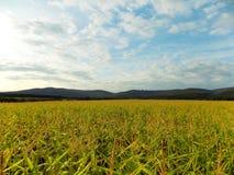 Kukurydzany pole i wzgórza Zdjęcie Stock