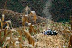 Kukurydzany pole na wzgórzu zdjęcia royalty free
