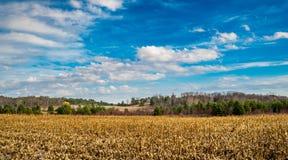 Kukurydzany pole Przez ogrodzenia Na spadku Obraz Stock