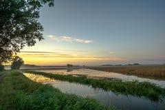 Kukurydzany pole przy wschodem słońca obrazy royalty free