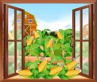 Kukurydzany pole w gospodarstwie rolnym royalty ilustracja