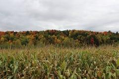 Kukurydzany pole w spadku Zdjęcia Royalty Free