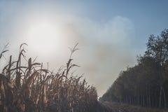 Kukurydzany pole z dymem ogień w tle zdjęcie stock