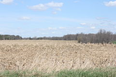Kukurydzany pole (Zbierający) Obraz Royalty Free