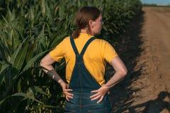 Kukurydzany rolnik w polu, portret agronom kobieta zdjęcie stock