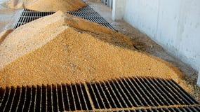 Kukurydzany rozładunek w Zbożową windę Obrazy Royalty Free