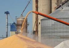 kukurydzany rozładunek Zdjęcie Royalty Free