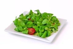 kukurydzany salat Obraz Stock