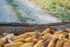 Kukurydzany sezon obraz royalty free