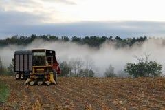 Kukurydzany siekacz i mgła obraz royalty free