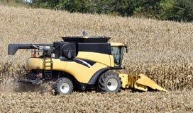 Kukurydzany syndykat Przy pracą obraz royalty free