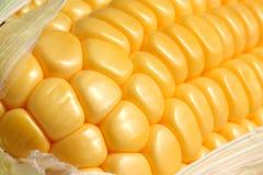 kukurydzany szczegół Zdjęcia Stock