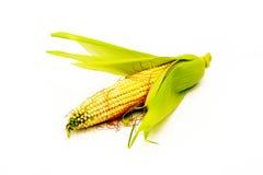 kukurydzany tło biel Zdjęcia Stock