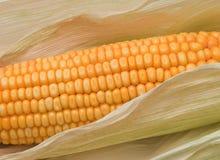 kukurydzany ucho Zdjęcie Stock