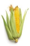 kukurydzany ucho Fotografia Royalty Free