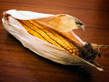 kukurydzany ucho Obrazy Royalty Free