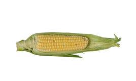 kukurydzany ucho Zdjęcia Royalty Free