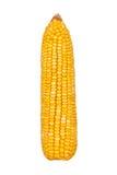 Kukurydzany ucho odizolowywający Obrazy Royalty Free