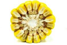 Kukurydzany ucho, przekrój poprzeczny Zdjęcia Stock
