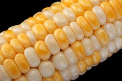 Kukurydzany vegatable zbliżenia tło fotografia stock