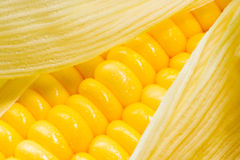 kukurydzany wizerunek Obrazy Stock