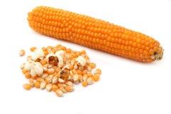 kukurydzany wystrzał Obrazy Stock