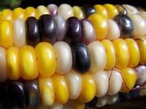 kukurydzany zamknięty kukurydzany hindus Obrazy Royalty Free