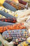 kukurydzany zamknięty kukurydzany hindus Zdjęcie Stock