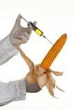 kukurydzany zastrzyk Zdjęcie Royalty Free