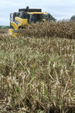 Kukurydzany zbierać Fotografia Stock