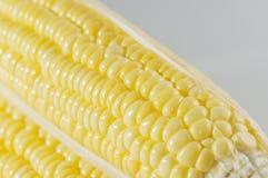 Kukurydzany zbliżenie Fotografia Stock